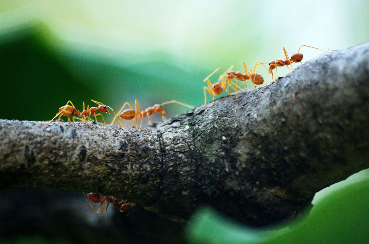 ants crawling on a branch